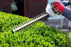 pic of cutting trees  - Cutting a hedge with electrical hedge trimmer - JPG