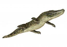 foto of crocodilian  - 3D digital render of an American alligator isolated on white background - JPG