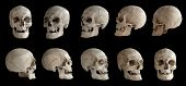 Human Anatomy. Human Skull. Collection Of Rotations Of The Skull. Skull At Different Angles. Isolate poster