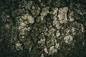 Oak Tree Bark Texture And Background For Design. Close View Of Old Rough Oak Bark Texture. Abstract  poster