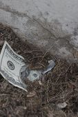 picture of close-up shot  - A close up shot of lost money waiting to be discovered by just the right person - JPG