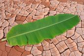 Arid lands of Banana Leaf