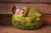 stock photo of headband  - 8 day old newborn baby girl sleeping in a green basket - JPG