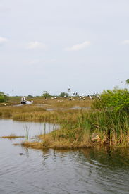 picture of airboat  - Flock of birds and airboat in the everglades - JPG