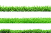 stock photo of pastures  - a grass isolated on a white background - JPG