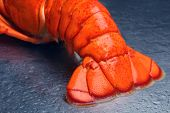 image of lobster tail  - Lobster tail - JPG