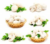 stock photo of agaricus  - Collection of champignon mushroom white agaricus isolated on a white - JPG