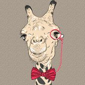 foto of camel  - sketch closeup portrait of funny camel hipster in red eyeglasses and bowtie - JPG