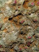 stock photo of mica  - Detail rubies in mica schist Leadville Colorado - JPG