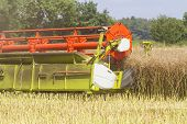 picture of rape-seed  - Close up of combine harvester harvesting oil seed rape - JPG