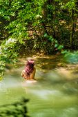 stock photo of bosom  - beautiful naked woman standing in water on river - JPG