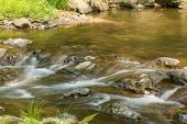 picture of brook trout  - Wild mountain trout stream in central Virginia - JPG