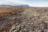 picture of arctic landscape  - Arctic landscape in summer with lichen vegetation and snowy mountain - JPG