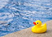 picture of baby duck  - Rubber duck beside the swimming pool in concept of baby exercise - JPG