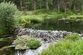 foto of spearfishing  - Water flowing over a beaver dam - JPG