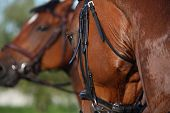 foto of chestnut horse  - Chestnut sport horse portrait during riding in summer - JPG