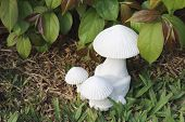stock photo of garden sculpture  - white mushroom sculpture is in flower garden - JPG