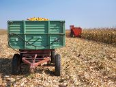 pic of combine  - Corn maize cobs during harvesting season loaded into a trailer and combine harvester in background - JPG