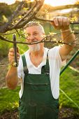 image of grandpa  - Portrait of a handsome senior man gardening in his garden - JPG