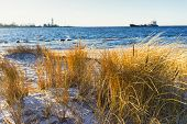 pic of dune grass  - Cargo ship enters the Strait lighthouse in winter on a background of yellow grass in the dunes - JPG