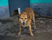 picture of stray dog  - Wet stray dog hiding from the rain at the entrance of a building - JPG