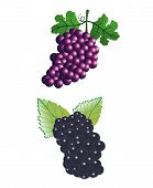 stock photo of grape  - Bunches of grapes - JPG