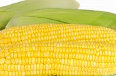 image of sweet-corn  - Peel sweet corn texture with white background - JPG