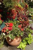 image of potted plants  - round terra cotta pot planted with an assortment of flowers and trailing foliage - JPG