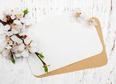 picture of apricot  - spring apricot blossom with card on a wooden background - JPG