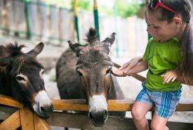 stock photo of burro  - Little boy and burro in contact zoo - JPG