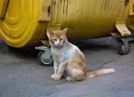 stock photo of dustbin  - Stray red cat sitting on a dustbin - JPG