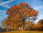 picture of knoxville tennessee  - Autumn Post Oak  - JPG