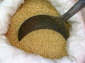 foto of sesame seed  - a bag of sesame with iron scoop in the market - JPG
