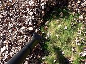 pic of leaf-blower  - fall yard work using a leaf blower to pile up fallen dead leaves - JPG