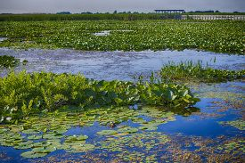 picture of marshes  - Marsh area in Point Pelee National Park - JPG
