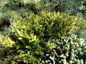 Colorful Seaview With Acropora Corals poster
