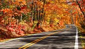 stock photo of cherry trees  - Road through red colored trees in Michigan - JPG