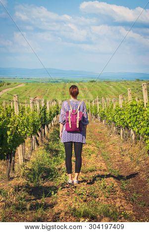 poster of Traveler Girl Walking Through Vineyards. Young Girl Traveler Walking In Nature. Traveler With Backpa