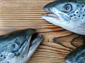 Salmon Fish Head Cut On Kitchen Board Background. Big Dead Salmon Fish Head With Open Mouth & Teeth  poster