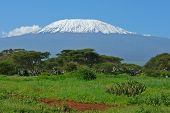 stock photo of kilimanjaro  - Landscape with snow covered peak of Kilimanjaro in Kenya - JPG
