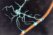 Astrocyte And Blood Vessel, 3d Illustration. Astrocytes, Brain Glial Cells, Also Known As Astroglia, poster