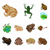 Vector Illustration Of Frog And Anuran Symbol. Collection Of Frog And Animal Stock Symbol For Web. poster