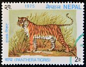 NEPAL - CIRCA 1975: A stamp printed in Nepal shows image a Tiger Panthera Tigris circa 1975.