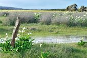 stock photo of arum lily  - rural landscape with old fence - JPG