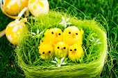 easter chick and painted Easter eggs for your easter design