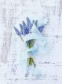 Grape Hyacinths with Blue Ribbon