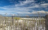 picture of sea oats  - A view of the Perdido Key Florida gulf coast with sea oats in the foreground - JPG