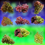 Clusters Of Ripe Grapes.