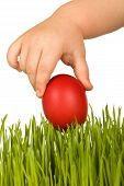 picture of easter-eggs  - Kid hand holding red easter egg over green grass  - JPG