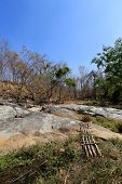 pic of drought  - Dried trees in the drought forest inside drought empty Song Long Song  - JPG